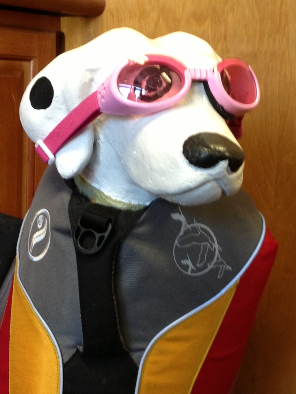 Image: Dog with Goggles (Free Blog Pictures)